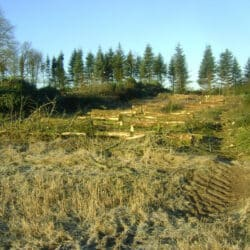 Skovning Aalborg