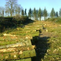 Skovning Randers
